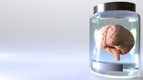 Ανθρώπινος εγκέφαλος σε ένα βάζο απεικόνιση αποθεμάτων