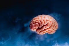 Ανθρώπινος εγκέφαλος σε ένα γκρίζο υπόβαθρο στοκ φωτογραφίες με δικαίωμα ελεύθερης χρήσης