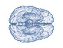 Ανθρώπινος εγκέφαλος - τοπ άποψη ελεύθερη απεικόνιση δικαιώματος