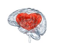 Ανθρώπινος εγκέφαλος γυαλιού Στοκ Εικόνες