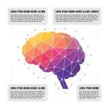 Ανθρώπινος εγκέφαλος - χρωματισμένη έννοια Infographic πολυγώνων Στοκ Φωτογραφία