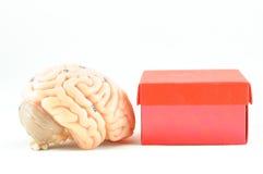 Ανθρώπινος εγκέφαλος Στοκ φωτογραφία με δικαίωμα ελεύθερης χρήσης