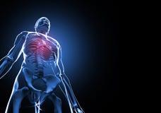 ανθρώπινος σκελετός Στοκ φωτογραφίες με δικαίωμα ελεύθερης χρήσης