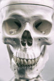 ανθρώπινος σκελετός Στοκ εικόνα με δικαίωμα ελεύθερης χρήσης