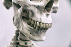 ανθρώπινος σκελετός Στοκ Φωτογραφίες