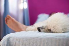 Ανθρώπινος ύπνος με το σκυλί στο κρεβάτι Στοκ φωτογραφία με δικαίωμα ελεύθερης χρήσης