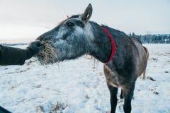 Ανθρώπινο άλογο τροφών Στοκ φωτογραφία με δικαίωμα ελεύθερης χρήσης