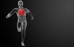 Ανθρώπινο αναπνευστικό σύστημα στην ακτίνα X Στοκ Εικόνες