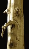 ανθρώπινο δέντρο προσώπου Στοκ Εικόνες