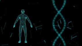 Ανθρώπινο είδωλο στην εικονική τρισδιάστατη ολογραφική προβολή με το φουτουριστικό μπλε DNA Αρσενική των ακτίνων X ανίχνευση ελεύθερη απεικόνιση δικαιώματος