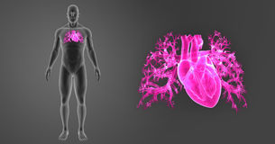 Ανθρώπινο ζουμ καρδιών με την προηγούμενη άποψη σωμάτων διανυσματική απεικόνιση
