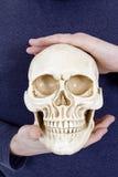 Ανθρώπινο κρανίο στα ανθρώπινα χέρια Στοκ φωτογραφία με δικαίωμα ελεύθερης χρήσης