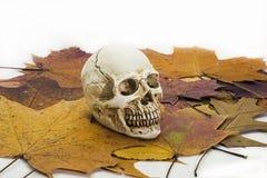 Ανθρώπινο κρανίο στα φύλλα φθινοπώρου Στοκ Εικόνες