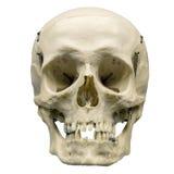 Ανθρώπινο κρανίο στο απομονωμένο άσπρο υπόβαθρο Στοκ Εικόνες