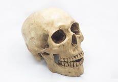Ανθρώπινο κρανίο στο απομονωμένο άσπρο υπόβαθρο Στοκ Φωτογραφία