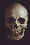 Ανθρώπινο κρανίο στο σκοτάδι Στοκ Εικόνες