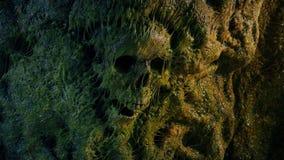 Ανθρώπινο κρανίο στο Slimy τοίχο σπηλιών απόθεμα βίντεο