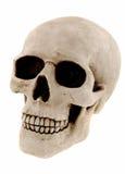 ανθρώπινο κρανίο στοκ εικόνα με δικαίωμα ελεύθερης χρήσης
