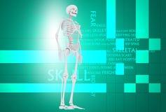ανθρώπινο κρανίο Στοκ εικόνες με δικαίωμα ελεύθερης χρήσης