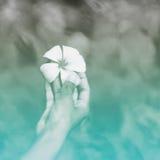 Ανθρώπινο λουλούδι Plumeria εκμετάλλευσης χεριών από τις Σεϋχέλλες Στοκ φωτογραφία με δικαίωμα ελεύθερης χρήσης