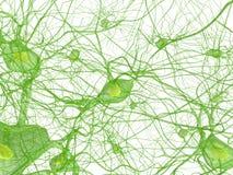ανθρώπινο νεύρο κυττάρων Στοκ Εικόνες