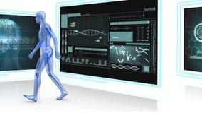 Ανθρώπινο περπάτημα ανατομίας διανυσματική απεικόνιση