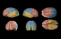 Ανθρώπινο πρότυπο εγκεφάλου Στοκ φωτογραφίες με δικαίωμα ελεύθερης χρήσης