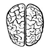 Ανθρώπινο σημάδι εγκεφάλου της Νίκαιας Στοκ φωτογραφία με δικαίωμα ελεύθερης χρήσης