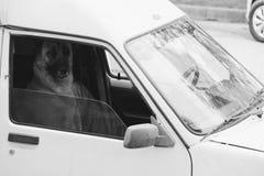 Ανθρώπινο σκυλί Στοκ φωτογραφίες με δικαίωμα ελεύθερης χρήσης