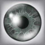 Ανθρώπινο στενό επάνω διάνυσμα της Iris ματιών Υγιής ιατρική απεικόνιση έννοιας απεικόνιση αποθεμάτων