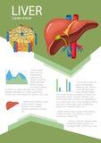 Ανθρώπινο συκώτι infographic απεικόνιση αποθεμάτων