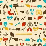 Ανθρώπινο σχέδιο ανατομίας άνευ ραφής Σκελετός και εσωτερική ΤΣΕ οργάνων απεικόνιση αποθεμάτων