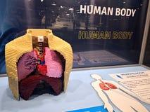 Ανθρώπινο σώμα - εισβολή έκθεσης Lego των γιγάντων στοκ φωτογραφία