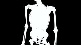 Ανθρώπινο σώμα και εσωτερικά όργανα στην περιστροφή βρόχων διανυσματική απεικόνιση