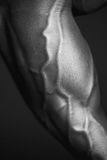 Ανθρώπινο σώμα σε γραπτό Στοκ φωτογραφία με δικαίωμα ελεύθερης χρήσης