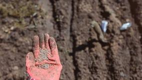 Ανθρώπινο χέρι με τους σπόρους για τη φύτευση στοκ εικόνα