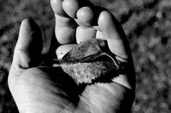 Ανθρώπινο χέρι που κρατά ένα μικρό φύλλο φθινοπώρου θανάτου στο ανθρώπινο χέρι παλαμών που κρατά ένα μικρό φύλλο φθινοπώρου θανάτ Στοκ Εικόνα