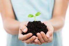 Ανθρώπινο χέρι που κρατά την πράσινη αύξηση φύλλων νεαρών βλαστών στο χώμα ρύπου Στοκ Εικόνες