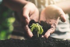 Ανθρώπινο χέρι που φυτεύει λίγο πράσινο νεαρό βλαστό Στοκ φωτογραφία με δικαίωμα ελεύθερης χρήσης