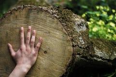 Ανθρώπινο χέρι σχετικά με το κούτσουρο δέντρων που κόπηκε ακριβώς στοκ φωτογραφία