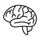 Ανθρώπινο όργανο εγκεφάλου διανυσματική απεικόνιση