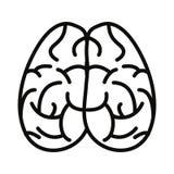 Ανθρώπινο όργανο εγκεφάλου ελεύθερη απεικόνιση δικαιώματος