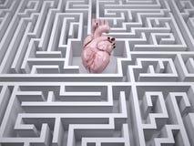 Ανθρώπινο όργανο καρδιών στο λαβύρινθο λαβύρινθων Στοκ Εικόνα