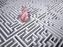 Ανθρώπινο όργανο καρδιών στο λαβύρινθο λαβύρινθων Στοκ φωτογραφίες με δικαίωμα ελεύθερης χρήσης