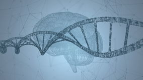 Ανθρώπινο DNA, ο εγκέφαλος Αφηρημένο υπόβαθρο με το πλέγμα Ζωτικότητα βρόχων ελεύθερη απεικόνιση δικαιώματος