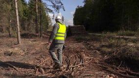 Ανικανοποίητος υλοτόμος στο δάσος απόθεμα βίντεο