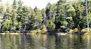 Ανιχνεύσεις λιμνών Massawepie adirondack που διασχίζουν το καλώδιο Στοκ Εικόνες