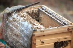 Ανοίγοντας κυψέλη μελισσών στοκ εικόνες