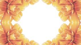 Ανοίγοντας τη μακροχρόνια ζωτικότητα χρόνος-σφάλματος λουλουδιών άνθισης πορτοκαλιά farme που απομονώνεται στον άσπρο νέο ποιοτικ φιλμ μικρού μήκους