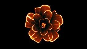 Ανοίγοντας τη μακροχρόνια τρισδιάστατη ζωτικότητα χρόνος-σφάλματος λουλουδιών άνθισης πορτοκαλιά που απομονώνεται στις νέες ποιοτ απόθεμα βίντεο